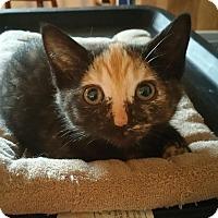 Adopt A Pet :: Star - Palmyra, NJ