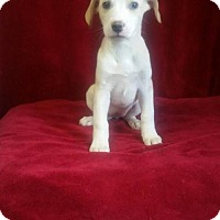 Adopt A Pet :: Fiona - Chester, IL