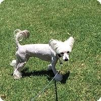 Adopt A Pet :: LILLY (COURTESY POSTING) - Phoenix, AZ