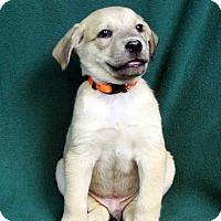 Adopt A Pet :: FRANKLIN - Westminster, CO