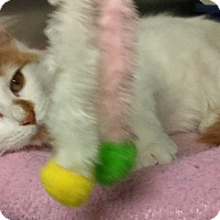 Adopt A Pet :: Twinkie - Glen cove, NY
