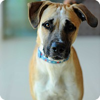 Adopt A Pet :: Trapper - Culver City, CA