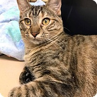 Adopt A Pet :: Hecate - Maryville, MO