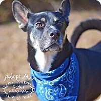 Adopt A Pet :: Kodi - Fort Valley, GA