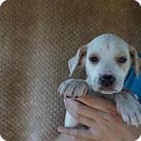 Adopt A Pet :: Kel - Oviedo, FL