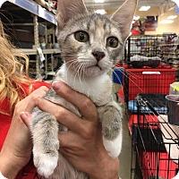 Adopt A Pet :: Ricotta - Athens, GA