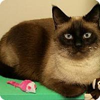 Adopt A Pet :: Bogie - Scottsdale, AZ