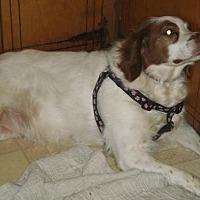 Adopt A Pet :: TN/Bailey - Jackson, MS