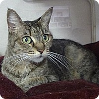 Adopt A Pet :: Minnie - St. Petersburg, FL
