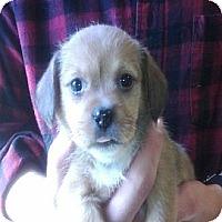 Adopt A Pet :: Mulan - Hop Bottom, PA