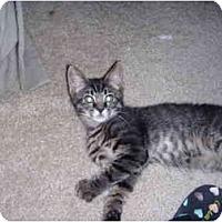 Adopt A Pet :: Babs - Davis, CA