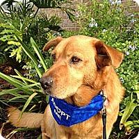 Adopt A Pet :: Jenna - Jacksonville, FL