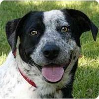 Adopt A Pet :: Millie - Mocksville, NC