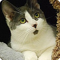 Adopt A Pet :: Dottie - Morgan Hill, CA