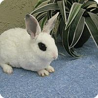 Adopt A Pet :: Peake-A-Boo - Bonita, CA