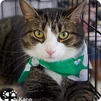 Adopt A Pet :: Kane - Merrifield, VA