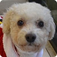 Adopt A Pet :: Dempsey - La Costa, CA