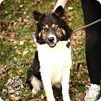 Adopt A Pet :: Briar - ADOPTED! - Zanesville, OH