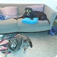 Adopt A Pet :: Ella & Zoe (Bonded Pair) - Ocean Ridge, FL