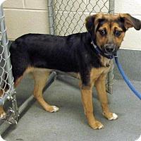Adopt A Pet :: Lucinda - Elmwood Park, NJ