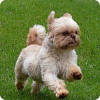Adopt A Pet :: Tater Tot - Abilene, TX