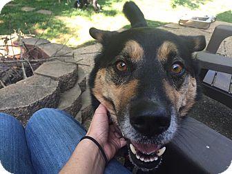 German Shepherd Dog/Husky Mix Dog for adoption in Smithton, Pennsylvania - Puddy