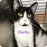 Adopt A Pet :: Darby - El Cajon, CA