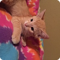 Adopt A Pet :: Valera - San Antonio, TX