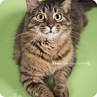 Adopt A Pet :: Lilly - Sterling Heights, MI