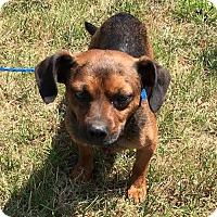 Adopt A Pet :: Bozart - York, SC