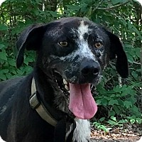 Adopt A Pet :: Goose - Allentown, PA