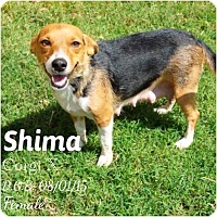 Adopt A Pet :: Shima - DeForest, WI