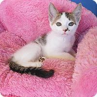 Adopt A Pet :: Paisley - Glendale, AZ