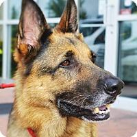 Adopt A Pet :: Cody - Gretna, NE