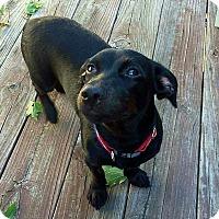 Adopt A Pet :: Kasey - Fincastle, VA