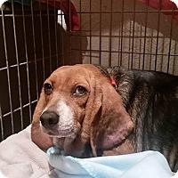 Adopt A Pet :: Ellen - Blue Bell, PA