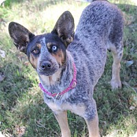 Adopt A Pet :: Kelli - Pipe Creed, TX