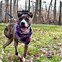 Adopt A Pet :: ALEXIS - Bridgewater, NJ