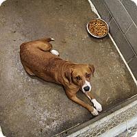 Adopt A Pet :: Ellie - Minneapolis, MN