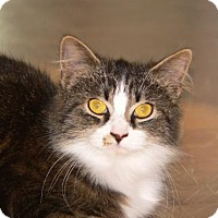 Adopt A Pet :: Daisy - White Bluff, TN