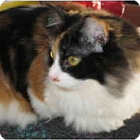 Adopt A Pet :: Callie - Jeffersonville, IN