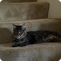 Adopt A Pet :: Ashlyn - San Ramon, CA