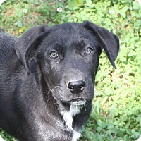 Adopt A Pet :: Liam - in Maine - kennebunkport, ME