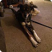Adopt A Pet :: Holiday - Dearborn, MI