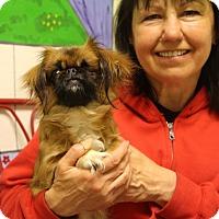 Adopt A Pet :: Sadie - Elyria, OH