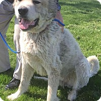 Adopt A Pet :: Atticus - LOVES doggies and kitties! - Columbia, MD