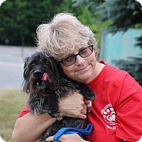 Adopt A Pet :: Boomer - Elyria, OH