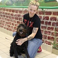 Adopt A Pet :: Cora - Elyria, OH