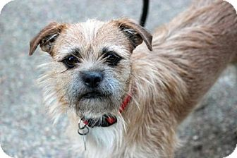 Terrier (Unknown Type, Medium) Dog for adoption in Antioch, California - Teddy