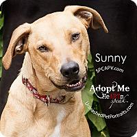 Adopt A Pet :: Sunny - Nanaimo, BC